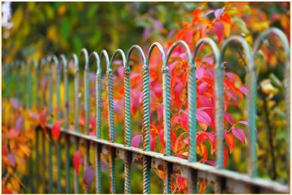Fence Maintenance Services